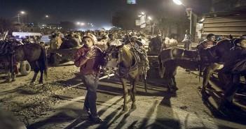 سباق «عربات كارو» على طريق مصر ـ أسيوط بالجيزة