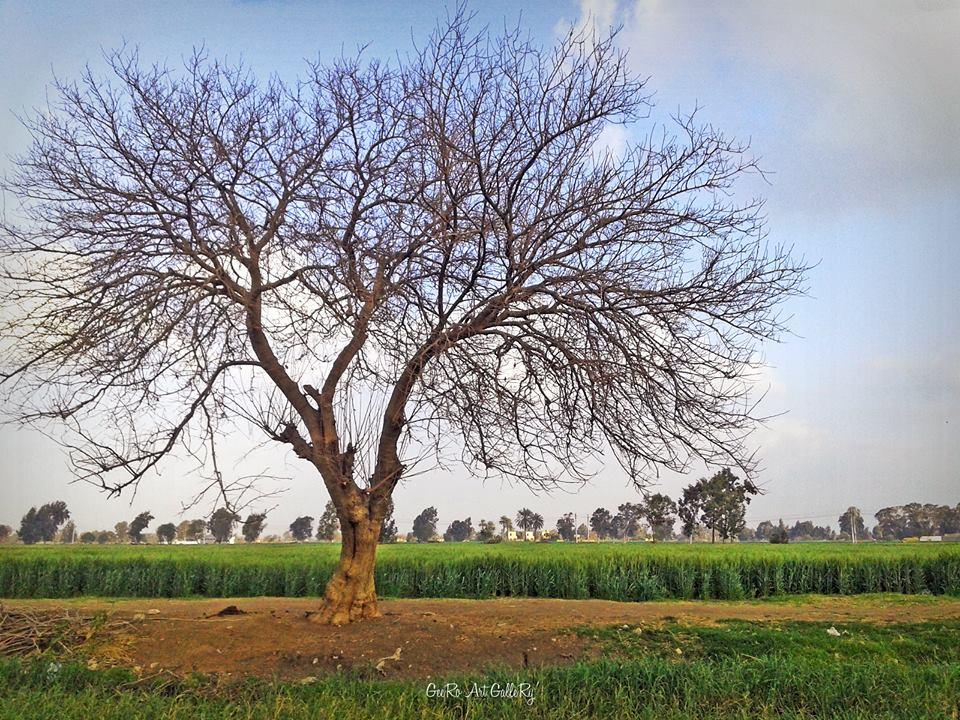 شوف.. مصر بكاميرا موبايل (صور)