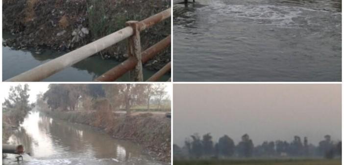 بالصور.. 350 فدانا بالغربية دون مياه.. تواصل أزمة ماسورة ريها منذ شهر