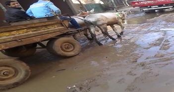 مسؤولو قليوب يتجاهلون ماسورة مياه مكسورة منذ أيام بميت حلفا