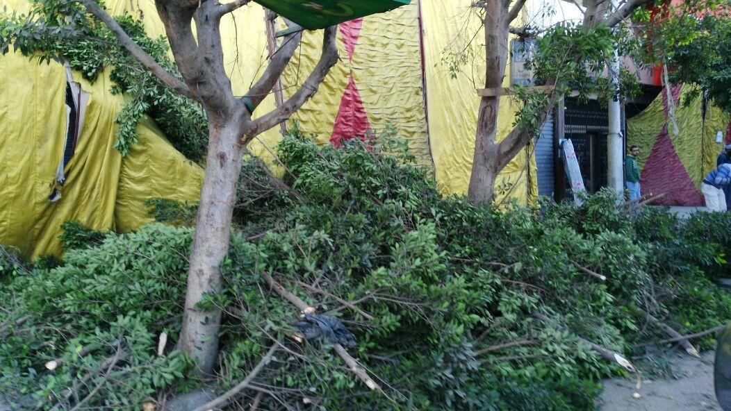 محل ملابس بميدان الجيزة يقطع الأشجار أمامه