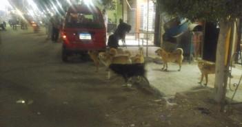 صور| انتشار الكلاب الضالة بشوارع القصاصين الجديدة بالإسماعيلية