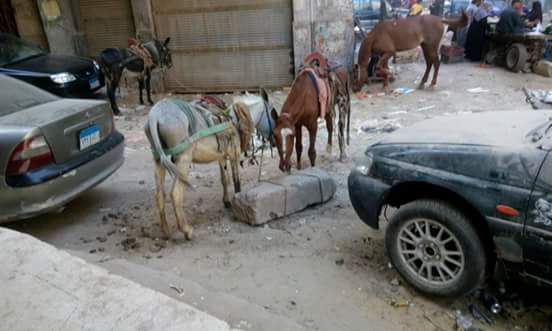 سكان «جمال عبدالناصر» بجسر السويس يشكون تفاقم الإشغالات والصرف: «قرفنا»