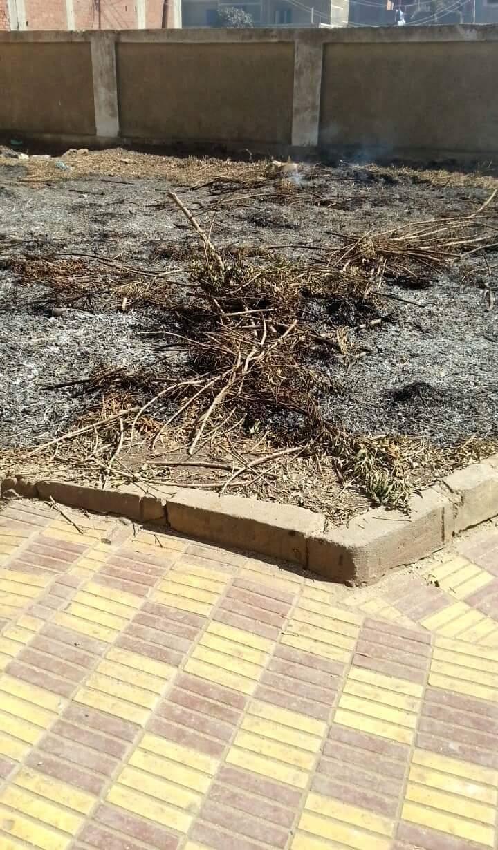 بالفيديو والصور.. اتهامات لمدير وحدة صحية بالشرقية بقطع أشجارها وبيعه