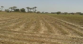 بالصور.. العطش يهدد أراضي سوهاج.. ومزارع: «وصلوا صوتنا للمسؤولين.. الزرع دبل»