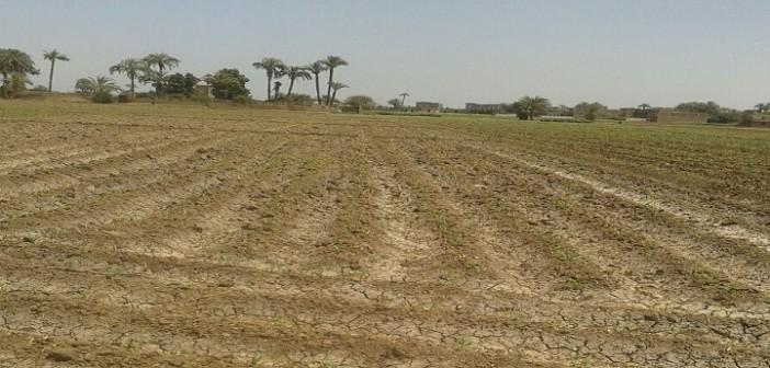 بالصور.. العطش يهدد أراضي سوهاج.. ومزارع: «وصلوا صوتنا.. الزرع دبل»