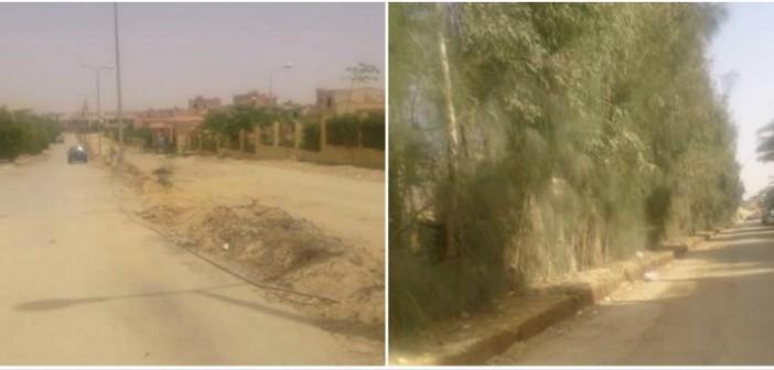 بالصور.. مذبحة الأشجار المُعمرة بمدينة «الشروق» (قبل وبعد)