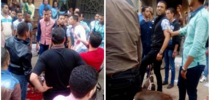 صور.. طالب يذبح عجلا احتفالا بتخرجه في «حقوق الإسكندرية» بعد 14 عامًا