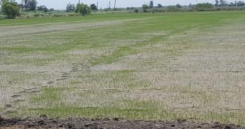 الأرض لو عطشانة.. العطش يهدد أراضي زراعية بدمياط بالبوار لقلة مياه الري (صور)