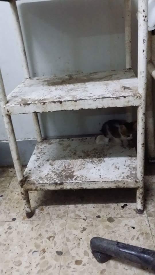 صور منسوبة لمستشفى مشتول السوق بالشرقية: إهمال ودماء وقطط في غرف المرضى