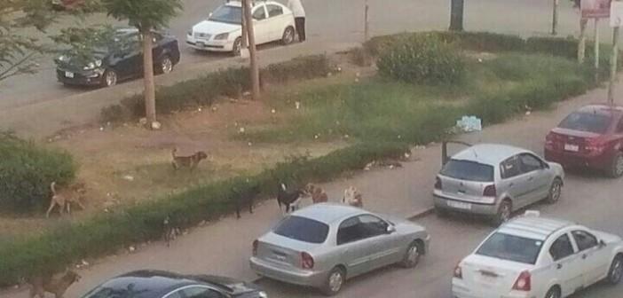 استياء من الكلاب الضالة بشارعي الرياضة والقباني بمدينة نصر (صور)