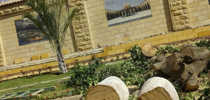 مديرة «سفنكس للتنمية»: أشجار عمرها 50 عامًا تم قطعها في «صلاح سالم»
