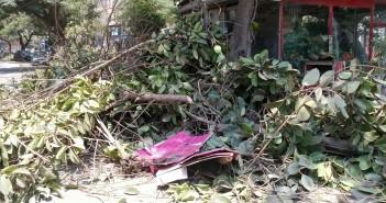 مواطن: حي وسط الجيزة قطع أشجار عمرها 35 عامًا بالمهندسين
