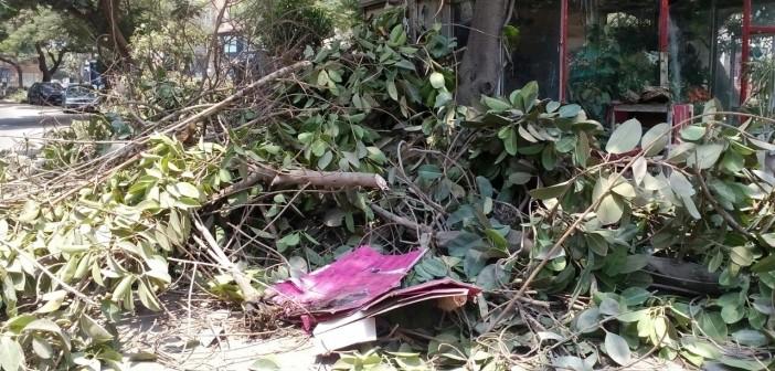 مواطن: حي وسط الجيزة قطع أشجارًا عمرها 35 عامًا بالمهندسين