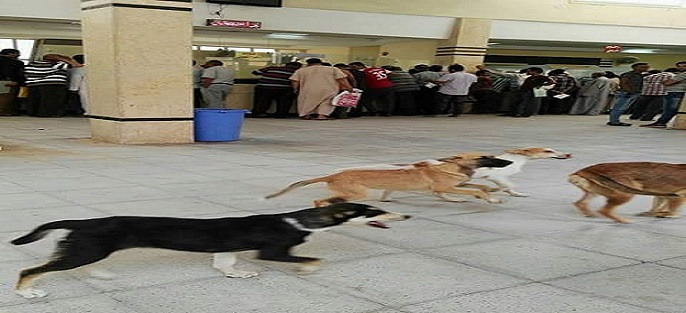 بالصور.. كلاب تتجول في مبنى مرور برج العرب بالإسكندرية