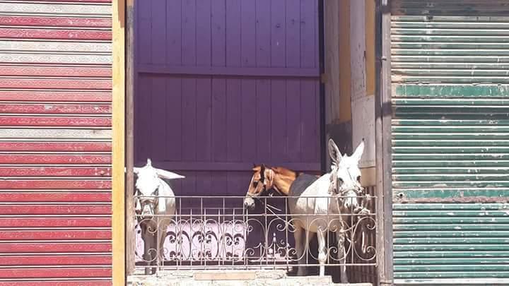 بالصور ..حيوانات وقمامة بقصر ثقافة ومكتب بريد البلينا بسوهاج