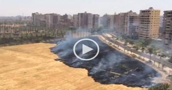 بالفيديو.. دخان حرائق قش القمح بجامعة القاهرة يثير غضب السكان: «اتخنقنا»