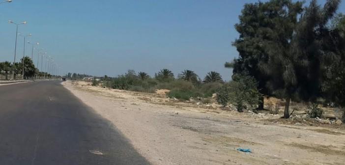 طفوا النور ..أعمدة إنارة بطريق برج العرب مضاءة في عز الظُهر (صور)