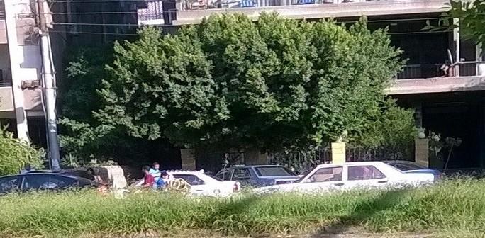 استياء من ارتفاع مستوى الحشائش بشوارع مصر الجديدة (صورة)