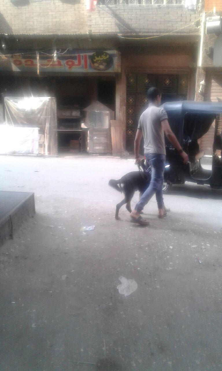 مواطنون يطالبون بمنع تواجد كلاب الحراسة بالشوارع (صورة)