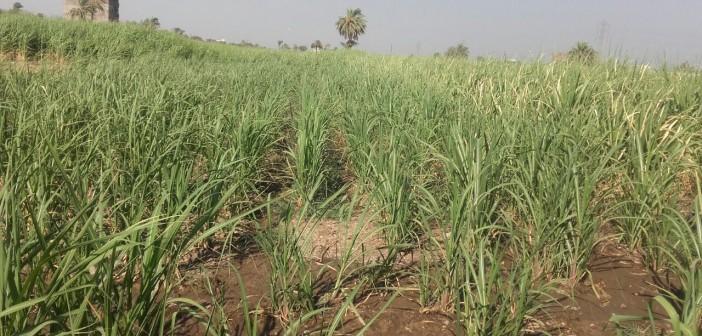 نقص مياه الري في «أبو حزام» بقنا.. والبوار يهدد أراضيها (صور)