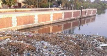 أهالي «كفر ربيع» يطالبون بتطهيرها من القمامة والحيوانات النافقة (صور)