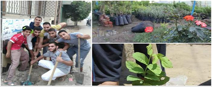 «هنخليها جنة».. مبادرة شباب «النمروط» بالشرقية لزراعة 1000 شجرة مُثمرة (صور)