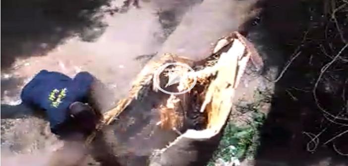 بالفيديو.. لحظة سقوط عامل الحماية المدنية أثناء قطعه شجرة بالدقي