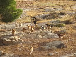 حيوانات ضالة و«السلعوة» تهاجم أهالي «بلانة» في أسوان (صورة)