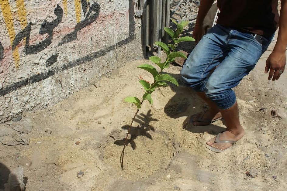 «هنخليها جنة» مبادرة شباب قرية النمروط بالشرقية لزراعة 1000شجرة مثمرة (صور)