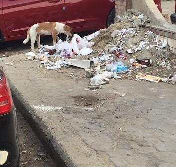 📸سكان مشروع «النزهة» بمدينة نصر يشكون تردي حال الشوارع وانتشار القمامة