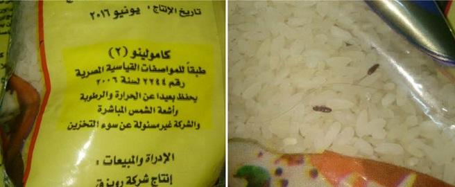 صور | «صراصير» بأرز التموين: الشركة الموردة وقعت في مخالفات منذ عهد مبارك