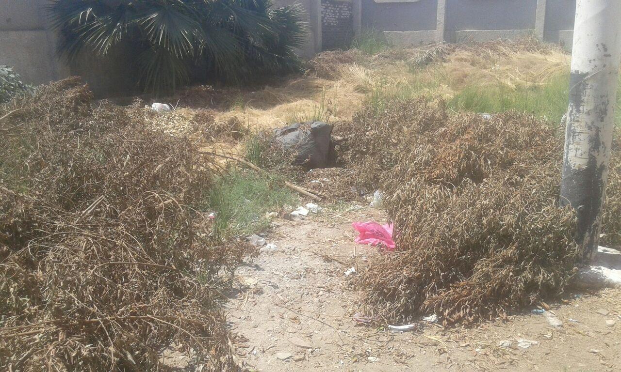 تجمعات للمخلفات والقمامة بجوار مستشفى أرمنت بالأقصر