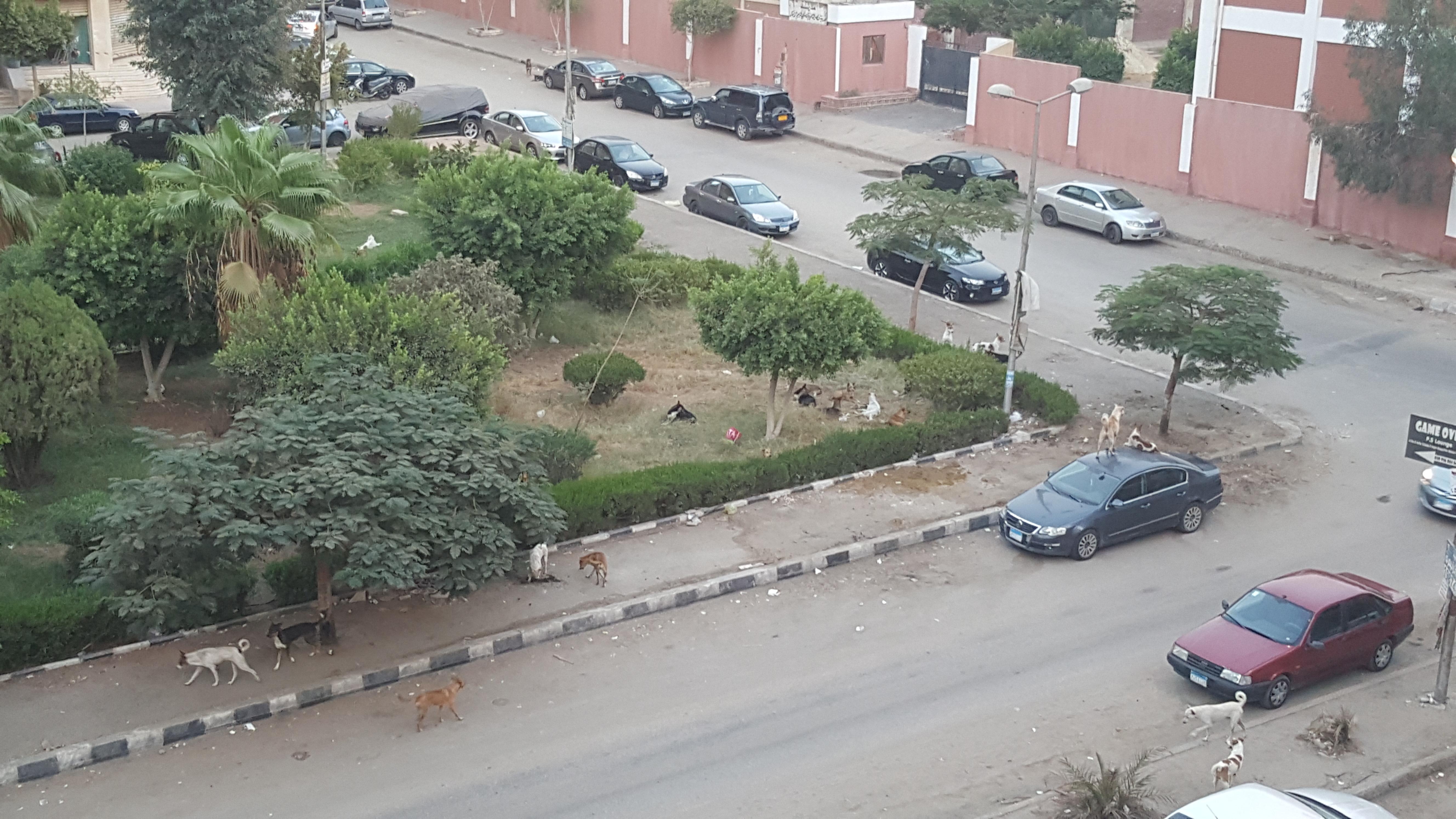 سكان المنطقة السادسة بمدينة نصر يشكون انتشار الكلاب الضالة بالشوارع
