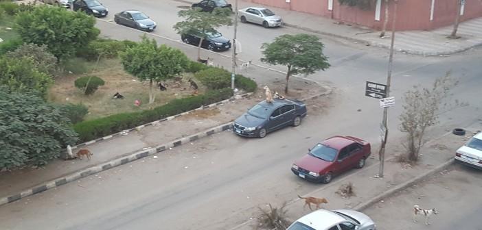 📸سكان المنطقة السادسة بمدينة نصر يشكون انتشار الكلاب الضالة بالشوارع