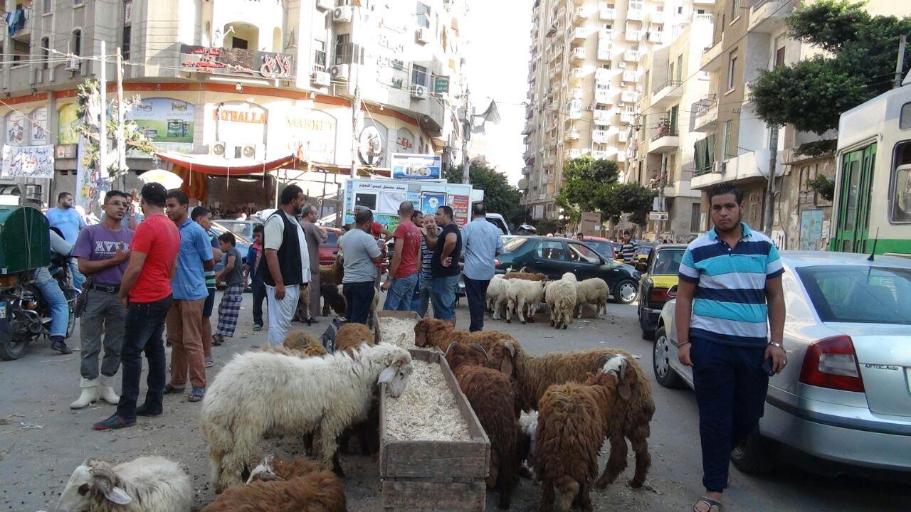 بالصور.. مواطن يرصد انتشار الإشغالات والقمامة في شوارع محرم بك