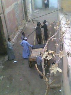 سكان «فرج فضة» بمنشأة ناصر يشكون من اسطبل بين الكتلة السكنية