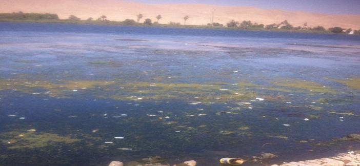 أهالي جزيرة راجح يطالبون مسؤولي الأقصر و«الري» بتطهير نهر النيل (صور)