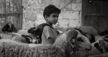 العيد في كوم الدكة بالإسكندرية.. وذبح الأضحية (صور)