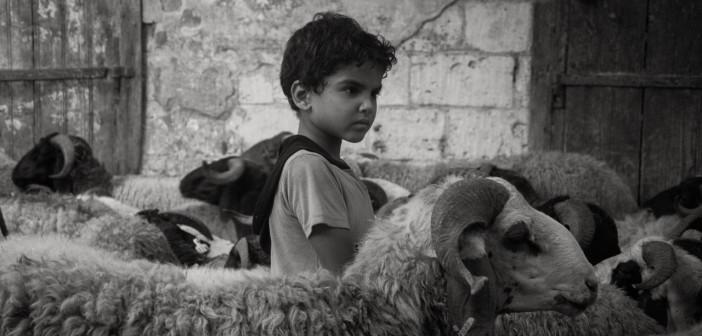 🐑 العيد في كوم الدكة بالإسكندرية.. وذبح الأضحية (صور)
