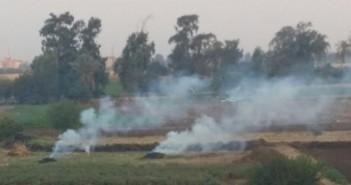 رغم تحذيرات البيئة.. موسم حرق قش الأرز يبدأ «بكفر جمعة»(صور)