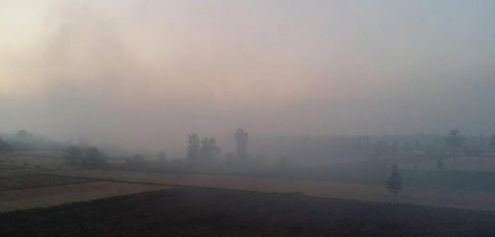 📸تواصل حرائق قش الأرز في «الجرايدة» بكفر الشيخ وسط غضب الأهالي (صور)