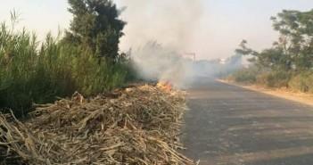 أهالي قرية «سلامون» بالبحيرة يستنجدون بوزارة البيئة للحد من ظاهرة حرق قش الأرز (صور)