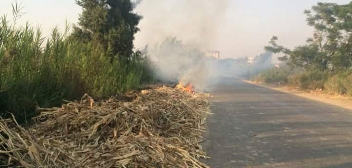 أهالي «سلامون» بالبحيرة يطالبون «البيئة» بالحد من حرق قش الأرز (صور)