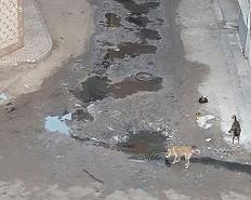 البحيرة، صحافة المواطن، واتس آب المصري اليوم، دمنهور