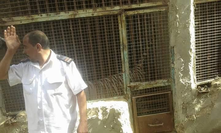 أهالي «كفر حميد» يقتحمون المزرعة الهارب النمر المتسبب في مقتل طفلة بالعياط «صور)