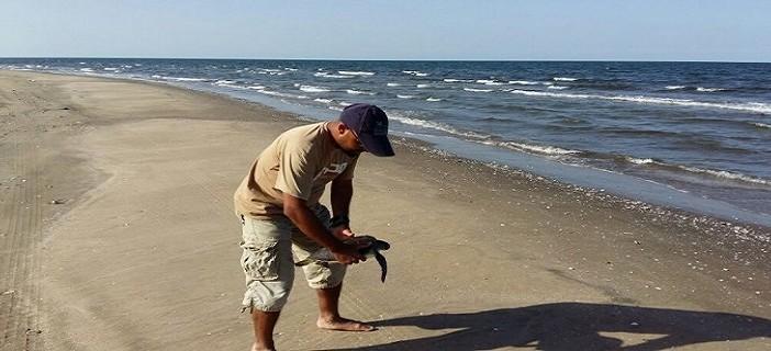 تحرير سلحفاة بحرية.. ونشطاء البيئة يرصدون انتهاكات ضد الطيور المهاجرة لدمياط (صور)