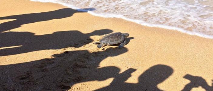 نشطاء حماية البيئة ينظمون حملة توعية ونظافة على شواطىء الإسكندرية (صور)