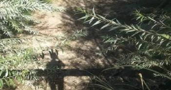 نقص مياه الري في قرى بالبحيرة