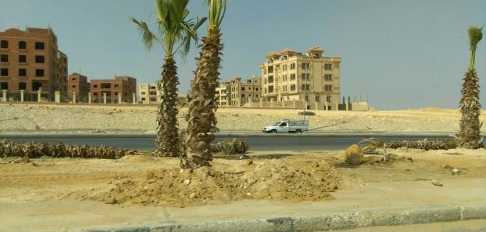 مواطن: مسؤولو الشيخ زايد أعادوا زراعة مدخلها بالنخيل بعد عامين من تشجيره (صور)
